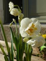 Frühlingsboten (23.02.2014)